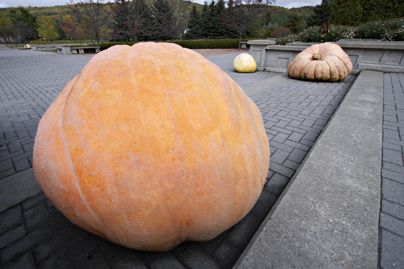 Pumpkins of New Brunswick Botanical Garden
